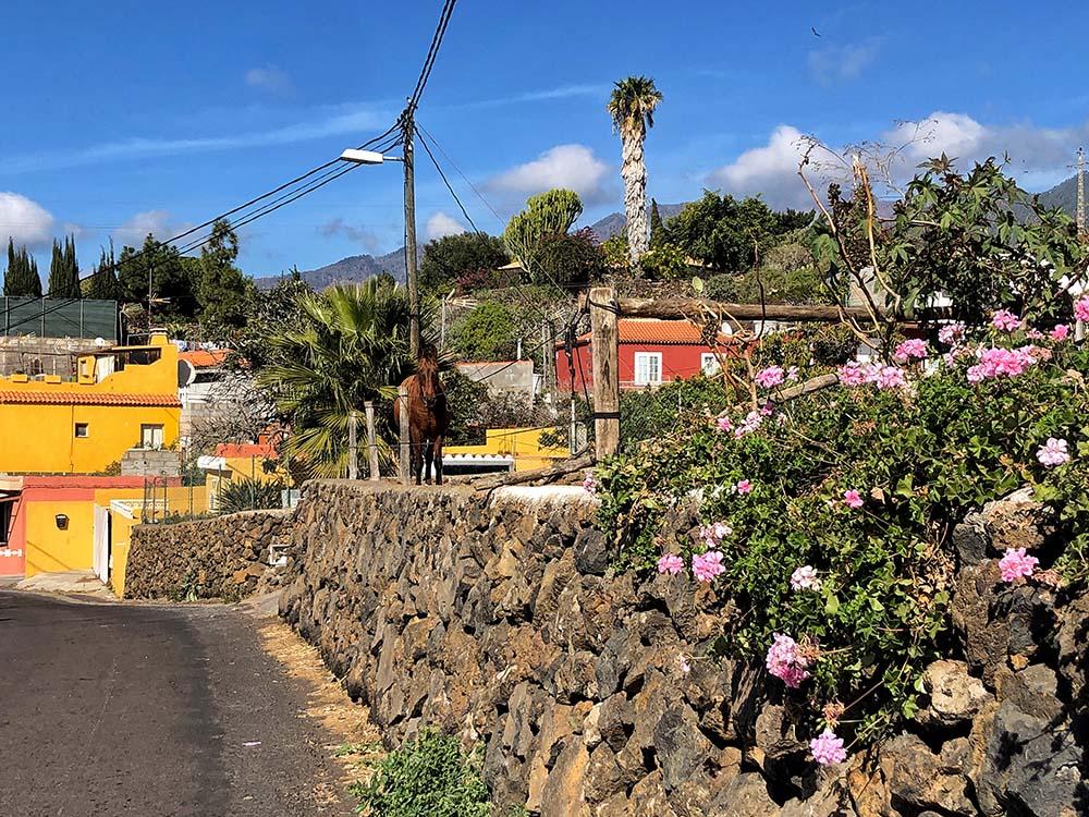 Canary Vibes La Palma