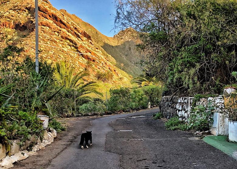 Wandern Teneriffa Punta del Hidalgo