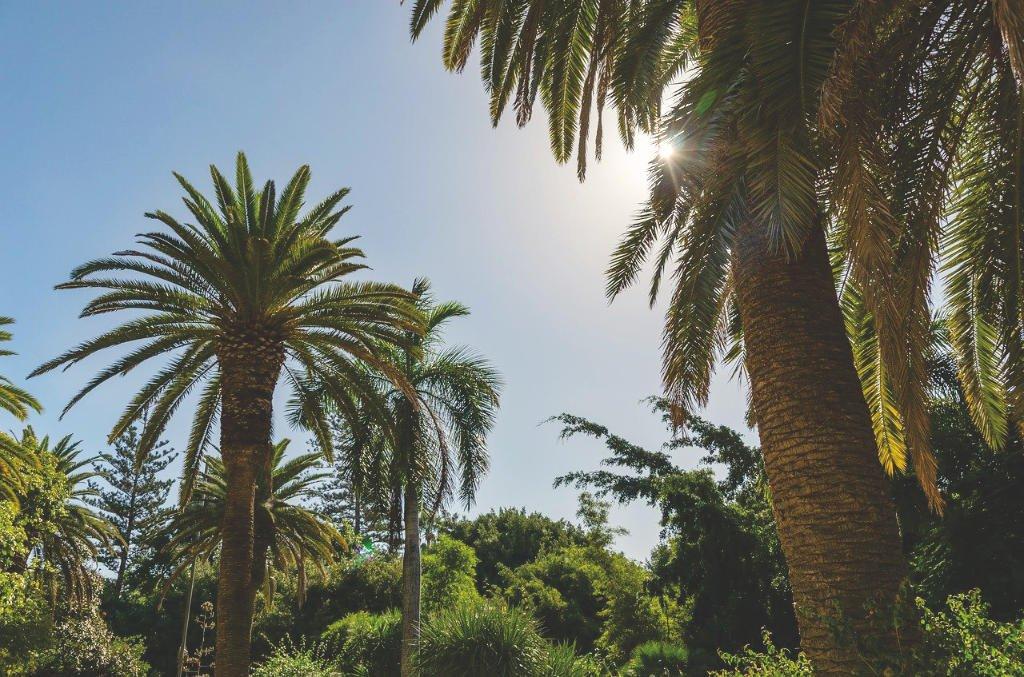 Palmengarten in Santa Cruz auf Teneriffa