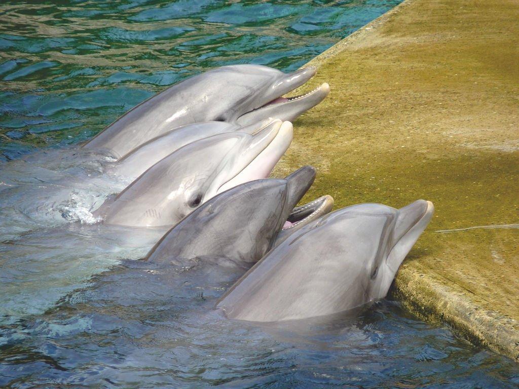Delfin Show keine gute Art diese Tiere zu sehen