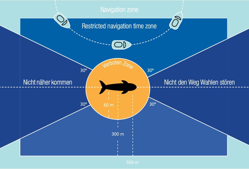 Whale Watching Regeln auf Teneriffa