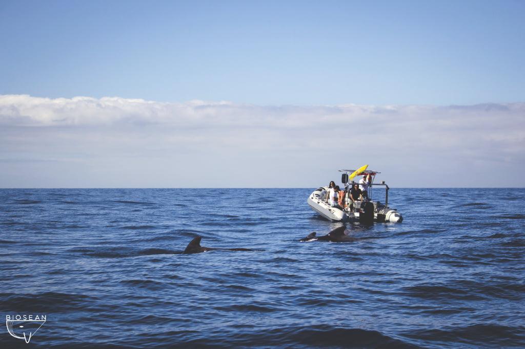Whale Watching aus dem Boot auf Teneriffa