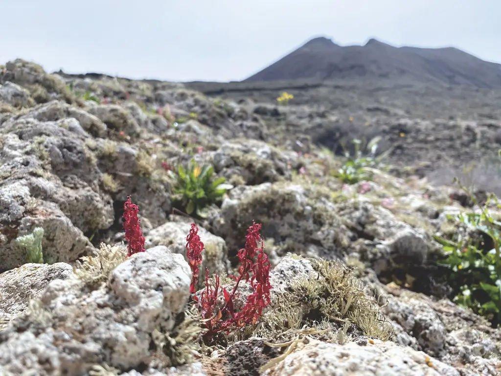 Wandern auf Fuerteventura - Voll#an de las Arenas